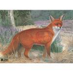 JVD Fox - Ansigt 68x50 cm