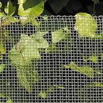 Trådhegn NSH Nordic Insect Wire Netting 1mx60cm 106-799