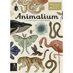Animalium Bøger Animalium (Inbunden, 2014), Inbunden