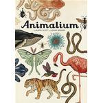 Animalium Bøger Animalium (Inbunden, 2015)