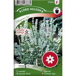 Nelson Garden Lavendel Ellagance Ice 20 pack