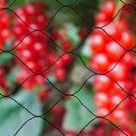Trådhegn Nature Bird Netting Primo 10x10m