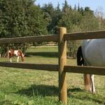 Gelænder NSH Nordic Derby Corner Pole for Horse Fence Ø14x200cm