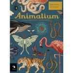 Animalium Bøger Animalium (Indbundet, 2019)