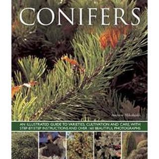 Conifers (Pocket, 2013), Pocket