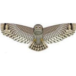 Xkites Owl 50.8cm